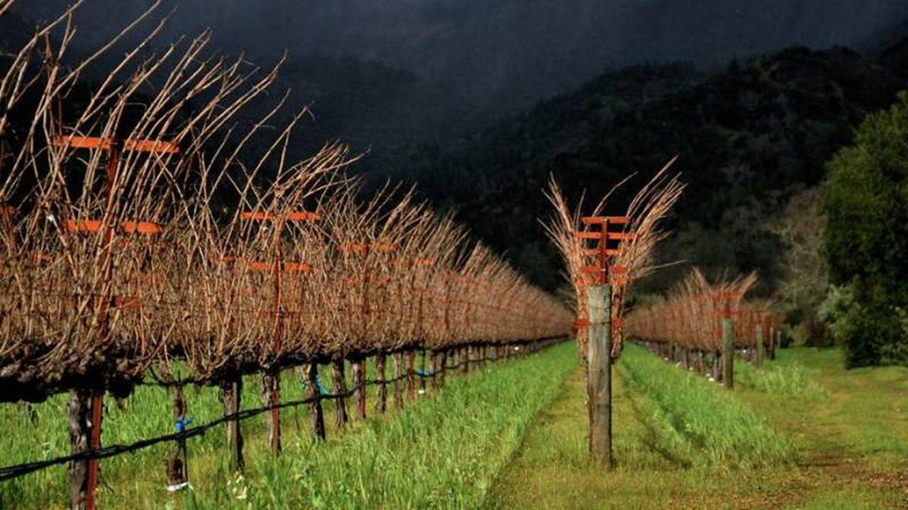 15612_1374852423_visuel-araujo-estate-wines.JPG