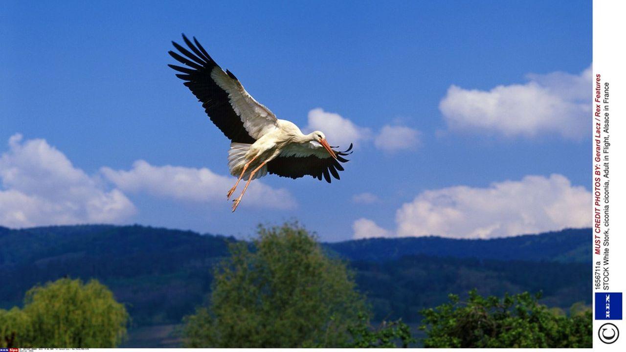 Les nids de cigogne sont protégés, comme l'animal /Rex_WEE45RD_1656711A//1203231934