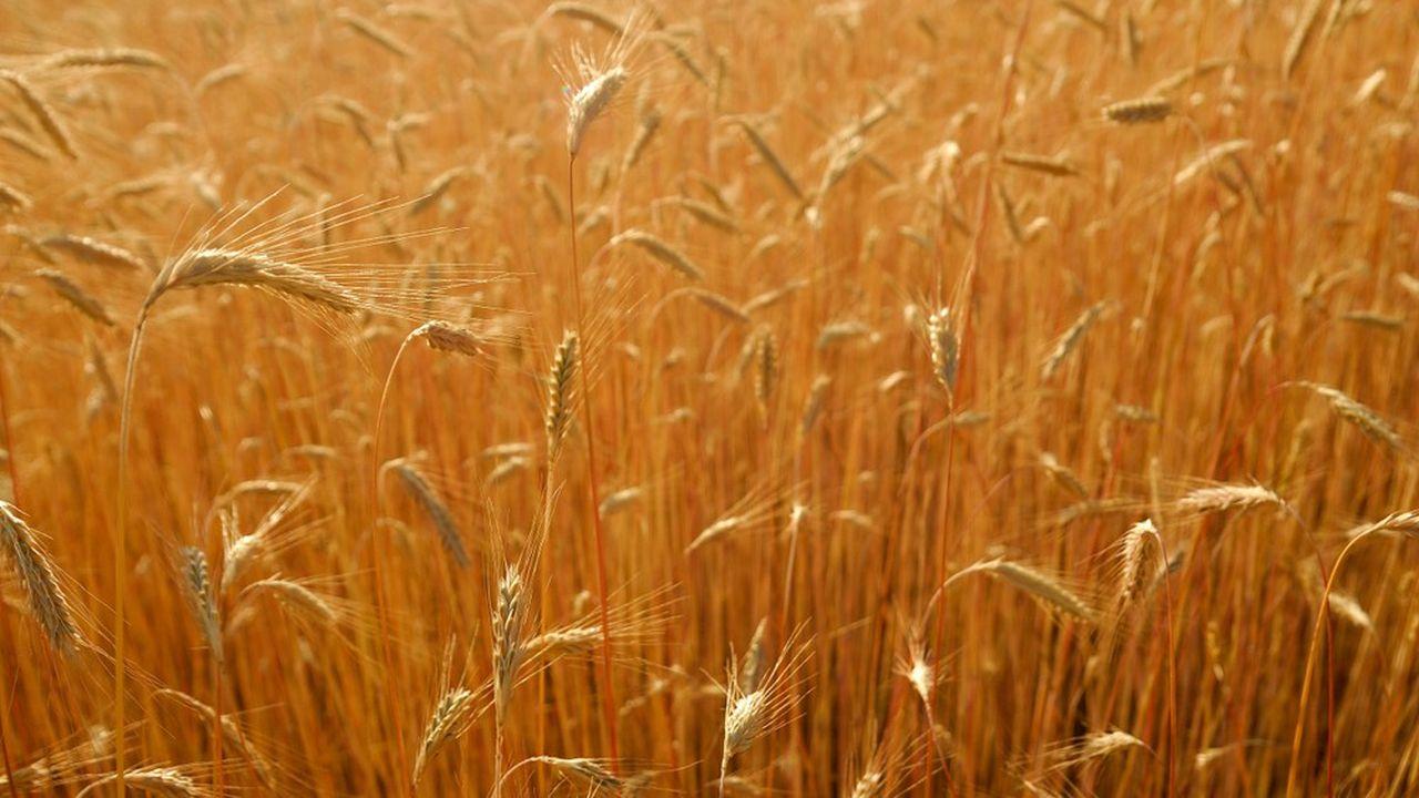 Le site alimentera une station de méthanisation de la biomasse tirée de cultures végétales intermédiaires telle que le seigle, dans le cadre de la rotation des cultures de légumes