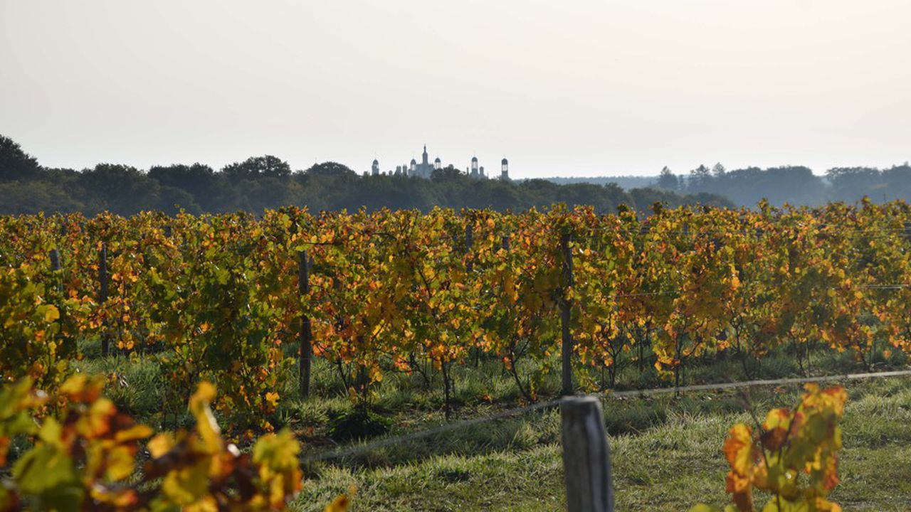 2199111_bientot-des-vins-estampilles-chambord-web-tete-0302119715404.jpg