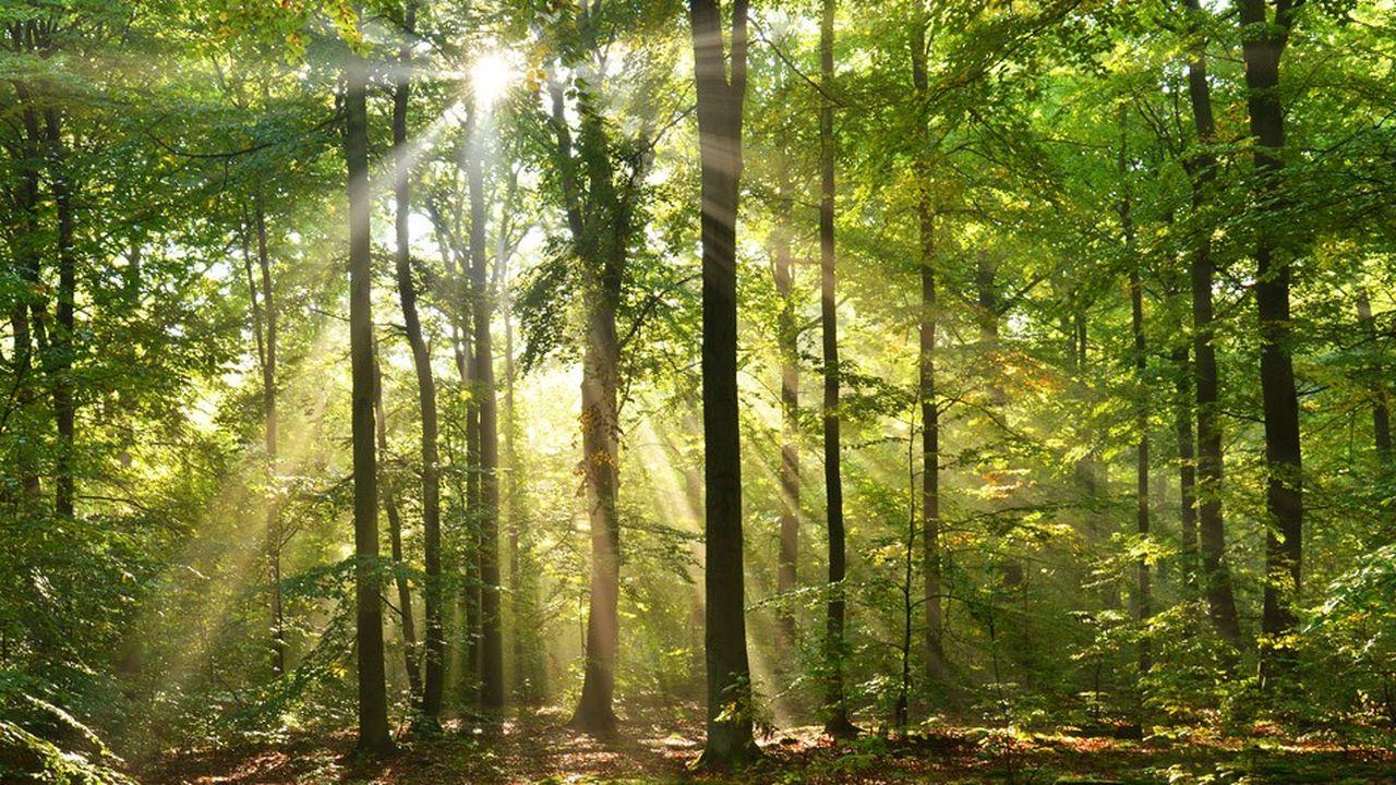 Les feuillus, davantage plébiscités par les promeneurs, occupent 75% des surfaces plantées françaises.