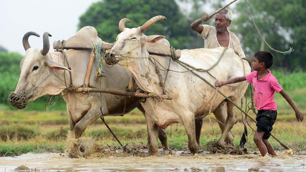 Par crainte de menacer leur sécurité alimentaire, certains pays en développement évitent à soumettre à des mesures d'atténuation leur agriculture, un secteur très émetteur de gaz à effet de serre.