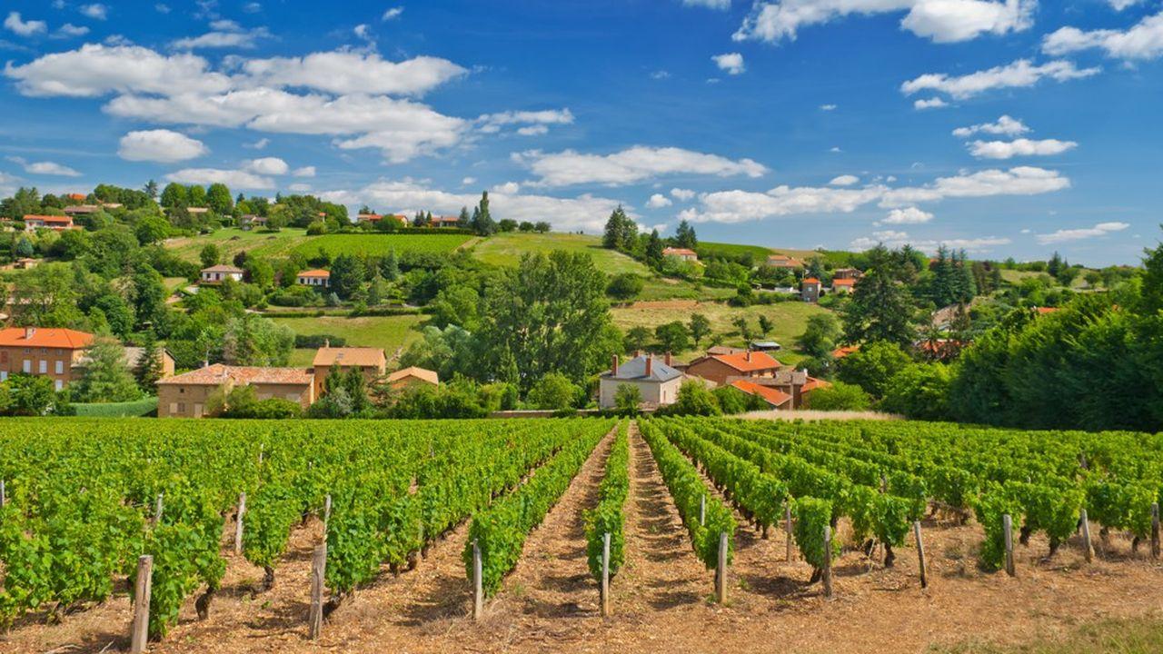 Les châteaux en agriculture biologique et en biodynamie ont particulièrement souffert du mildiou
