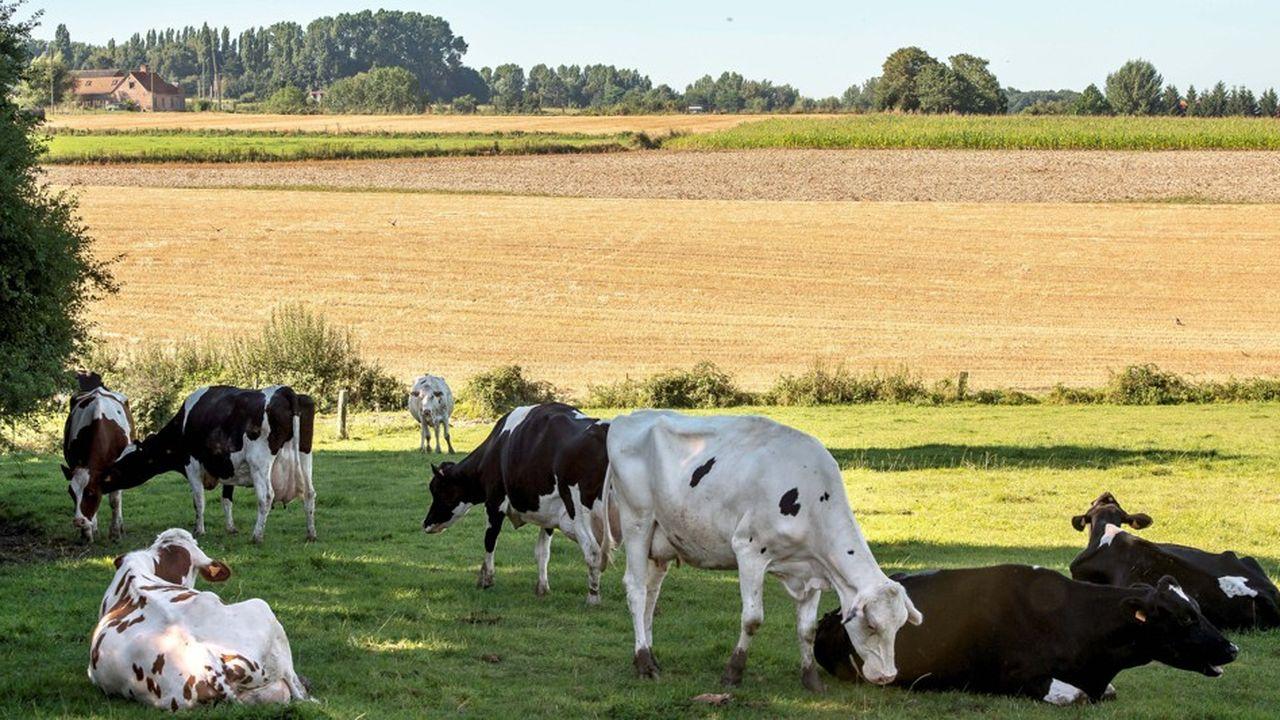 La consommation de viande continue de diminuer en France, mais les amateurs de viande mangent de plus en plus bio.