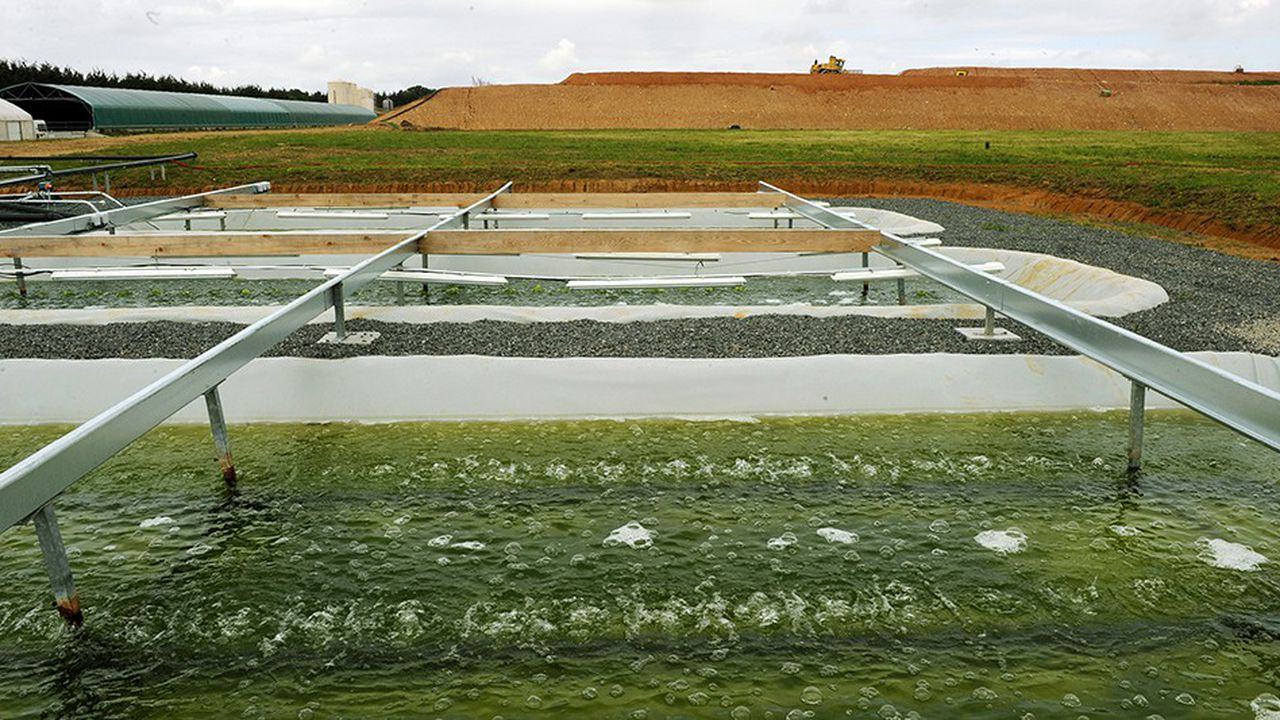 Des micro-algues s'alimentent en CO2 dans des bassins afin d'être transformées en carburant.