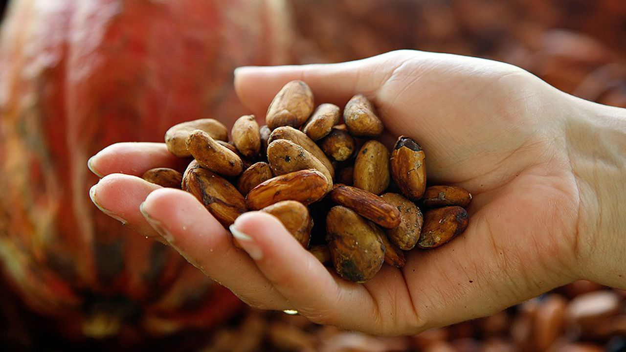 Mars, qui travaille avec 180.000 planteurs dans le monde, veut acheter 100% de cacao responsable en 2025.