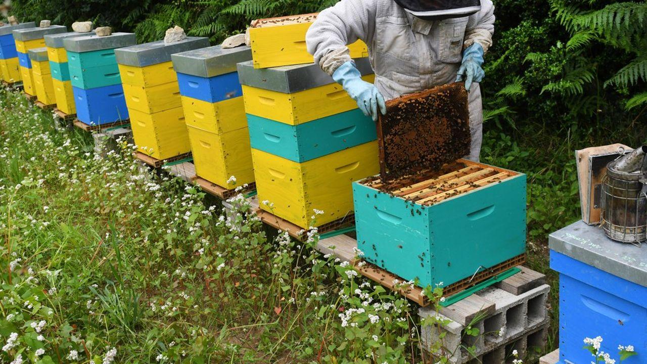 2216719_abeilles-30-des-ruches-detruites-pendant-lhiver-web-tete-06036807627.jpg