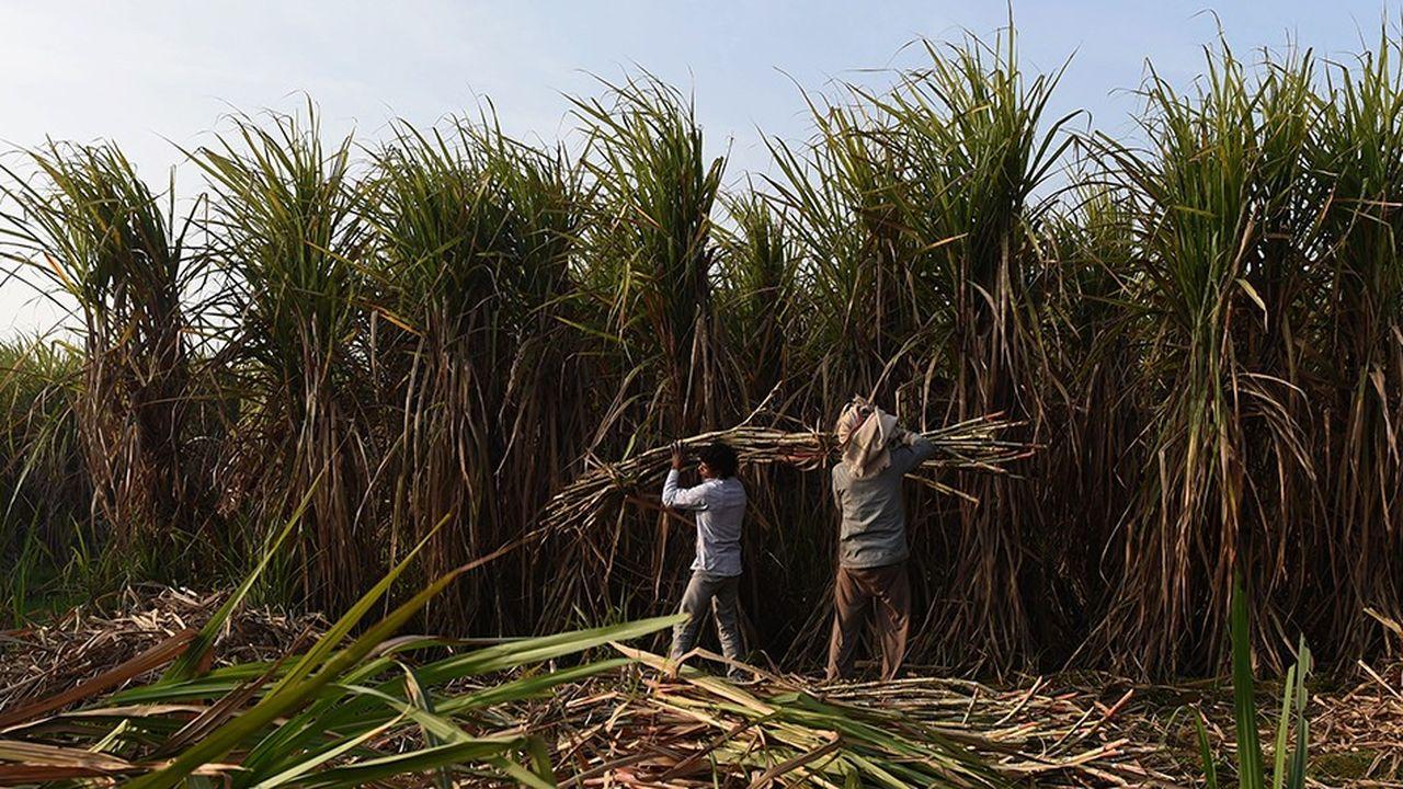 Les stocks de sucre entreposés à travers le monde sont énormes, ils devraient atteindre des records. Rien qu'en Inde, ils devraient plus que doubler.