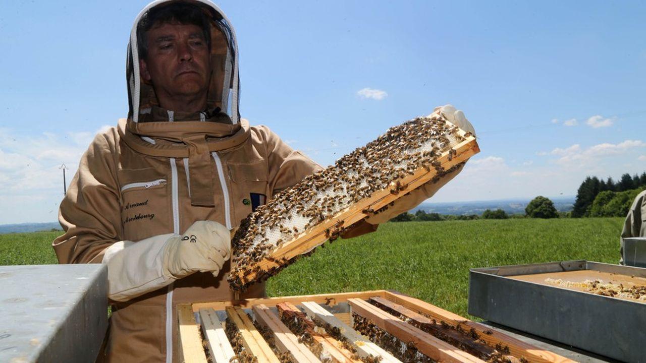 2197171_bleu-blanc-ruche-la-marque-de-miel-lancee-par-montebourg-web-tete-0302095286825.jpg