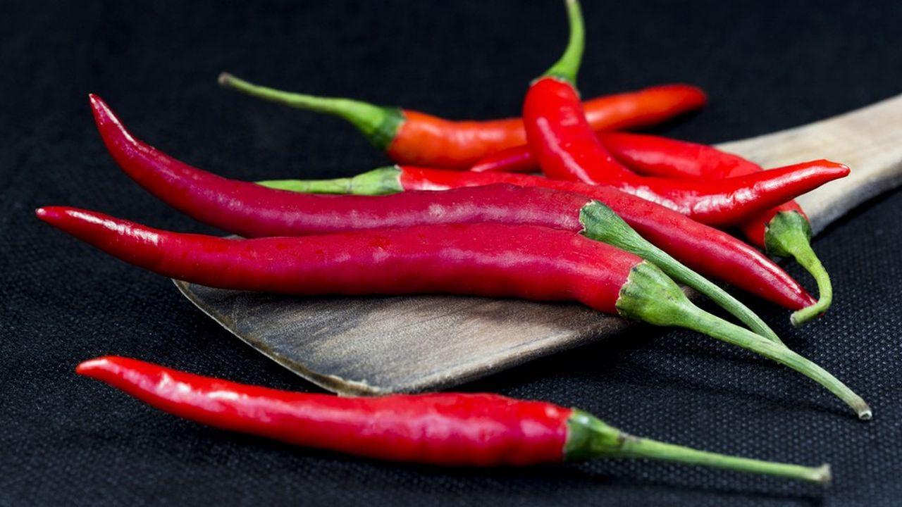 La substance active des célèbres « chili peppers », la capsaïcine, agit comme un vrai repoussoir contre les rongeurs, véritable fléau parce que friands des graines d'arbres.