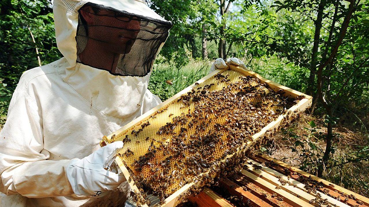 2198338_les-chiffres-sur-la-production-de-miel-font-debat-web-tete-0302123040521.jpg