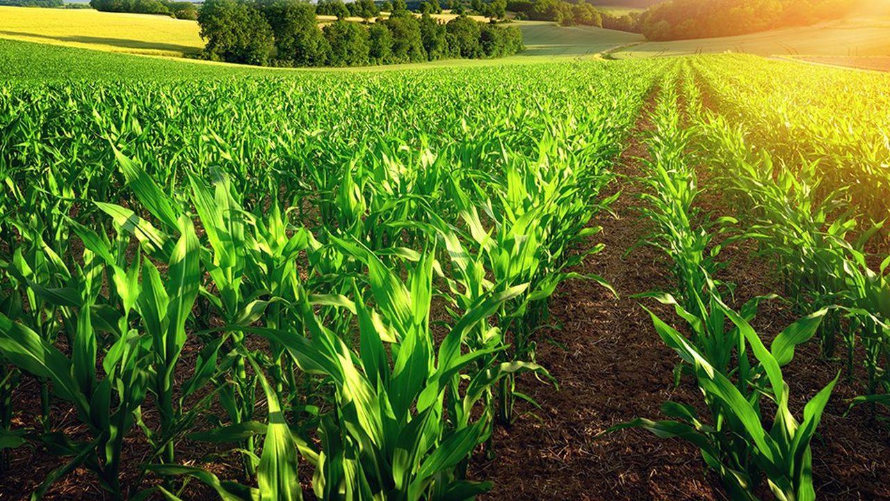 2199159_agriculture-le-bio-aussi-efficace-que-les-pesticides-contre-les-parasites-web-tete-0302142227795.jpg