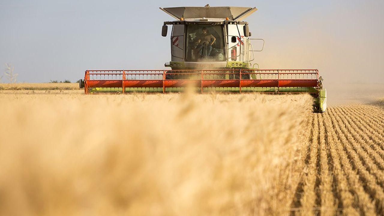 Le Sud-Ouest (Aquitaine, Midi-Pyrénées) est la région la plus touchée avec un rendement de blé tendre en chute de -15 % à - 20 %.