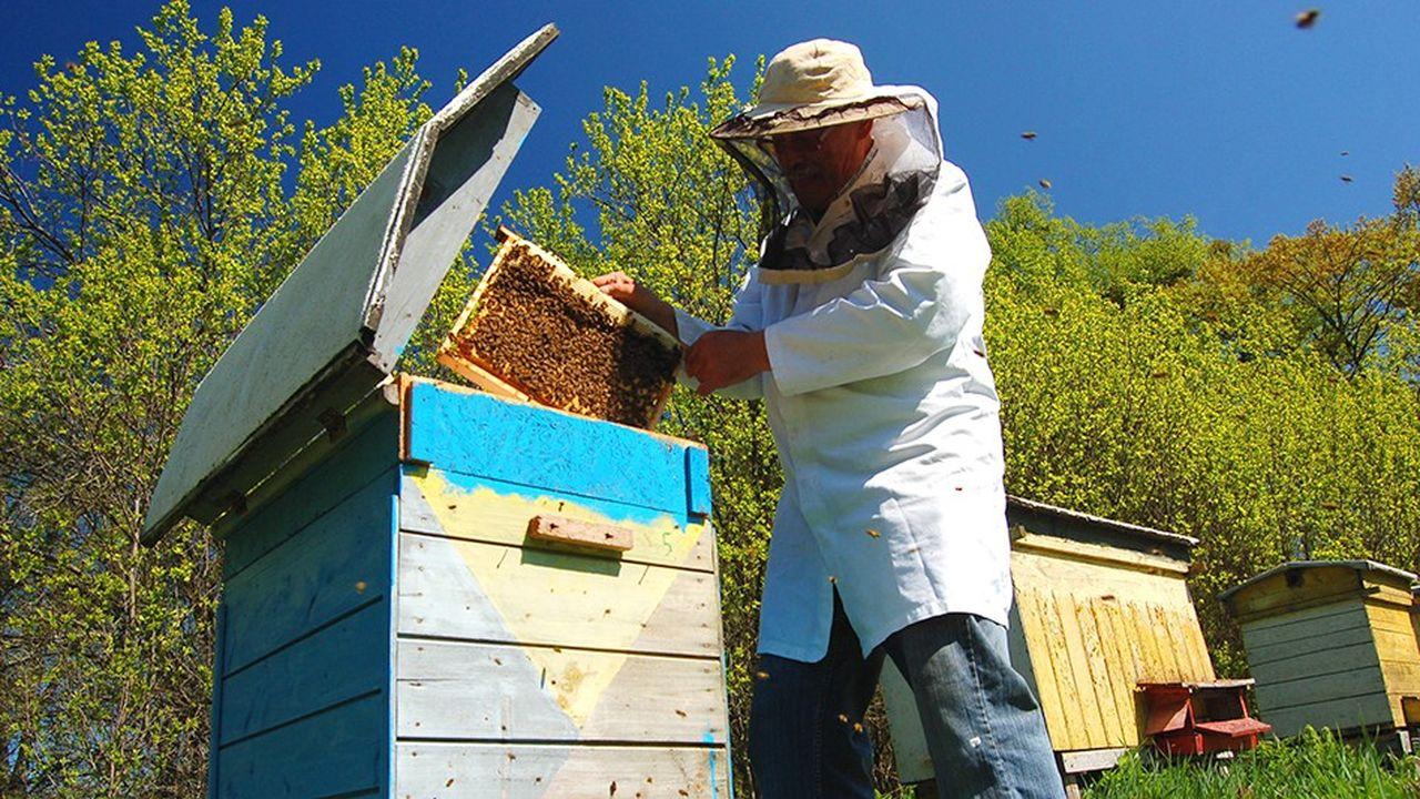 Lesnéonicotinoïdes déciment chaque année 300.000 colonies d'abeilles dans l'Hexagone, selon les ONG de défense pour l'environnement.
