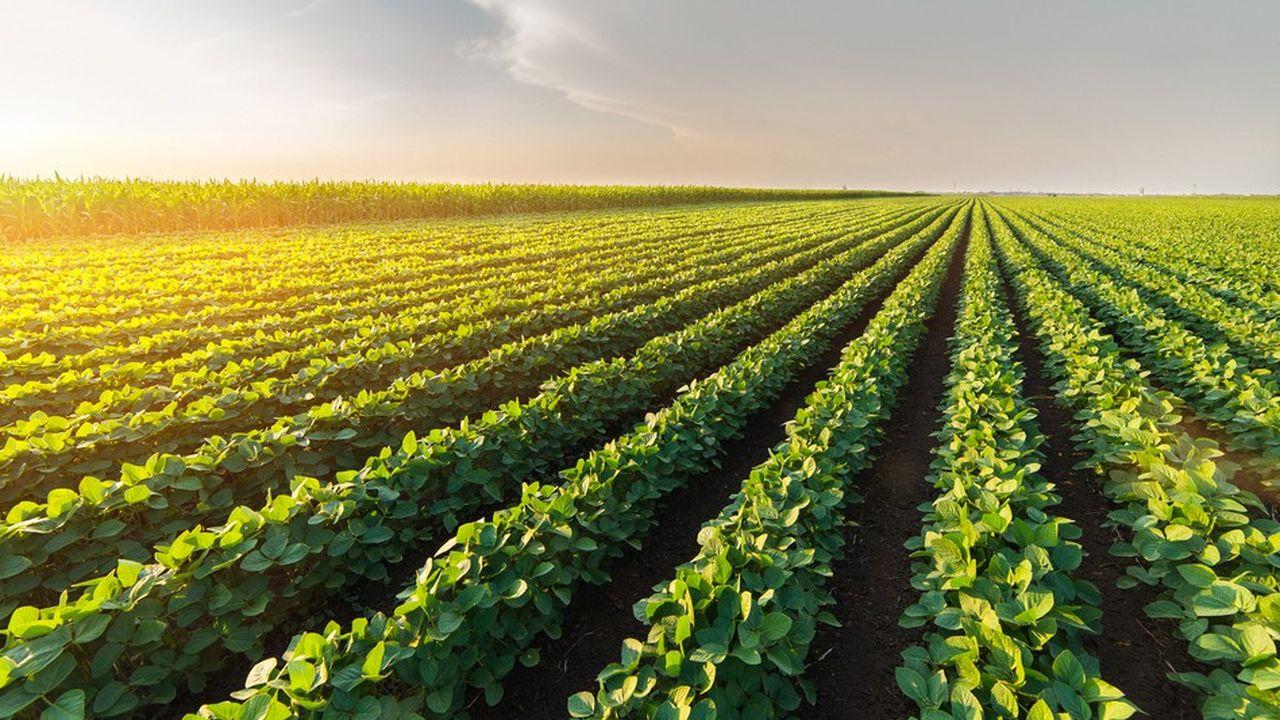 De Sangosse a conquis ses lettres de noblesse commerciale sur les marchés de la protection et de la nutrition des plantes, des semences et du contrôle des nuisibles.