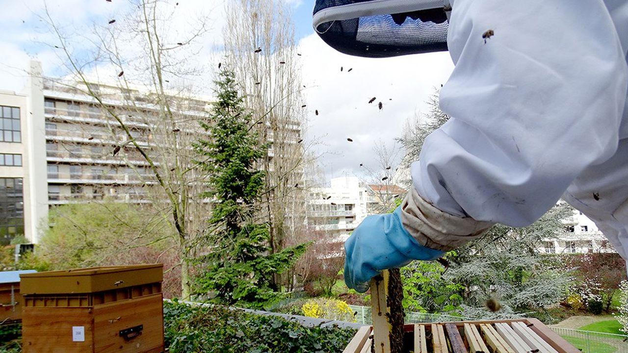 Les abeilles qui vivent en milieu urbain se portent mieux qu'à la campagne et trouvent une plus grande variété de fleurs à butiner.