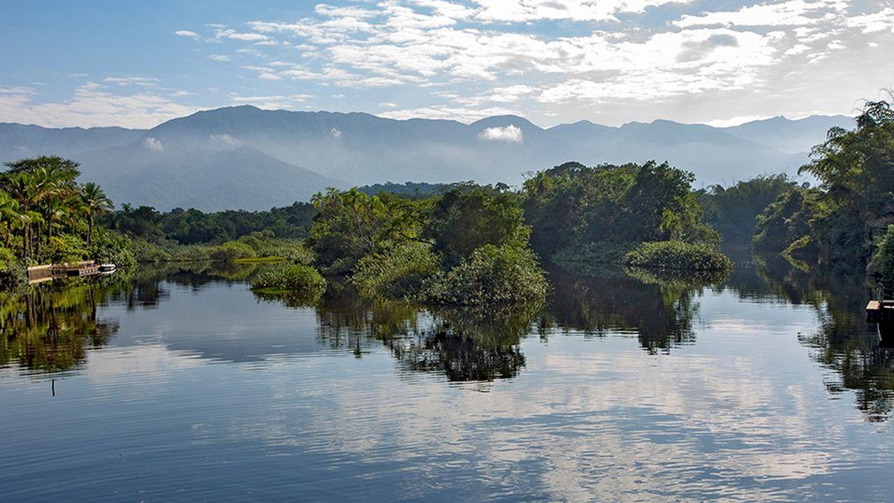 La mangrove figure en bonne place sur la liste des zones humides menacées de disparition.