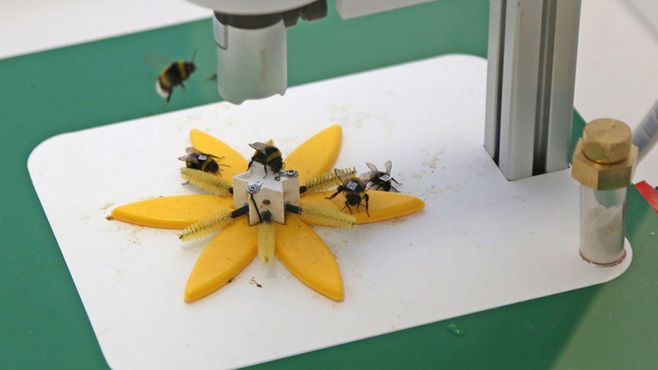 2213146_la-fleur-artificielle-connectee-qui-cherche-a-mieux-connaitre-les-abeilles-web-tete-0302385677896.jpg