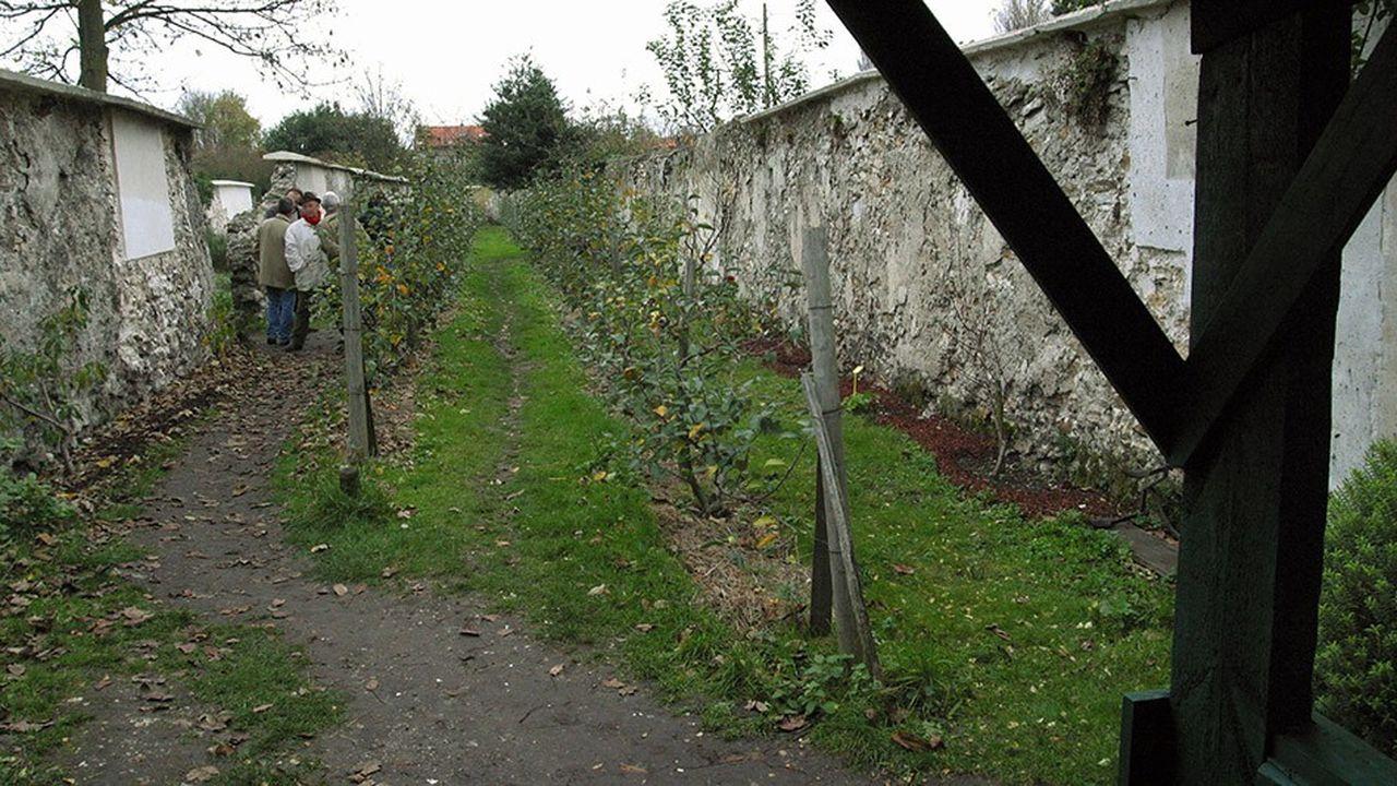 Journee de mobilisation pour la protection de murs a peches, sur un site de 35 hectares, construits par des paysans du 17eme siecle pour la culture d'arbres fruitiers, notamment des pechers, technique nee a Montreuil