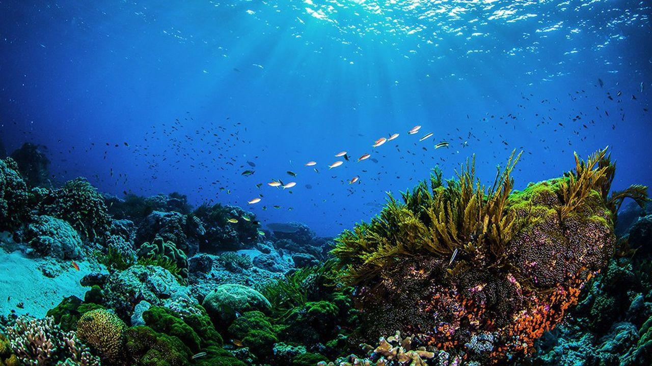 Les Seychelles sont engagés dans une démarche innovante pour protéger leurs fonds marins