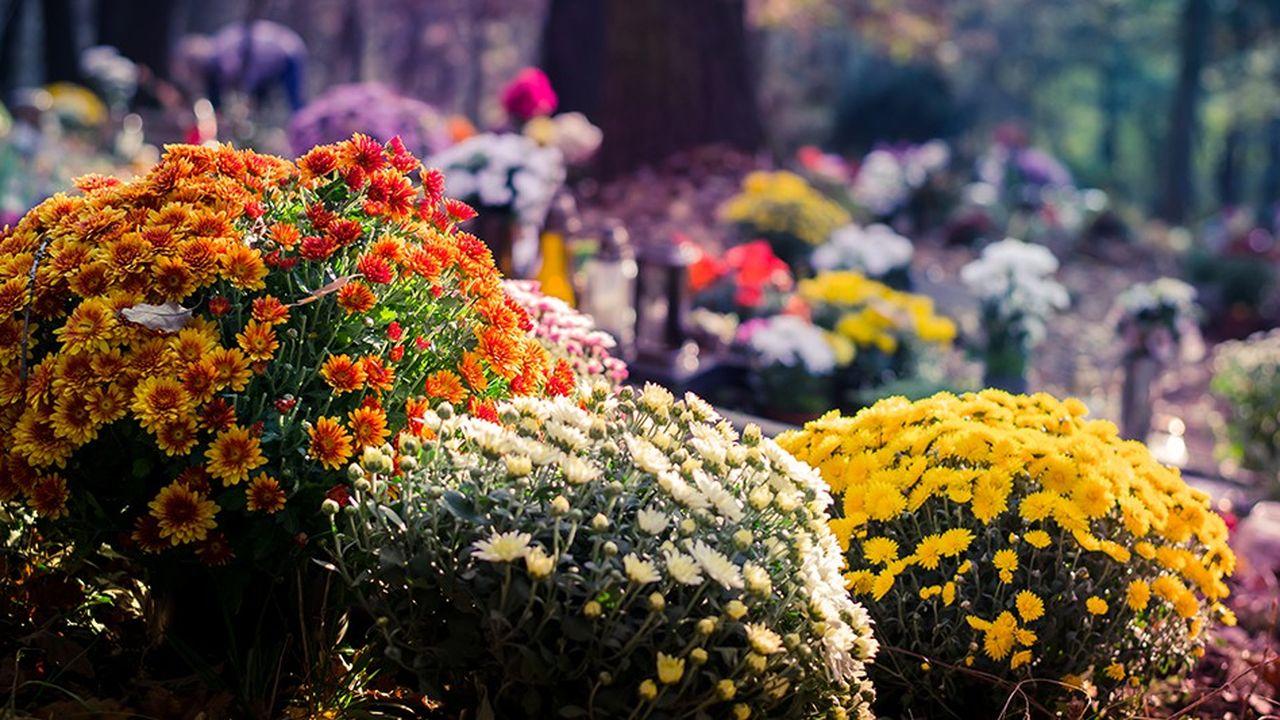 Le marché des fleurs de Toussaint, dominé à 77% par le chrysanthème, ne cesse de s'éroder. Les spécialistes de la livraison tentent de freiner la chute des ventes en proposant de nouveaux services.