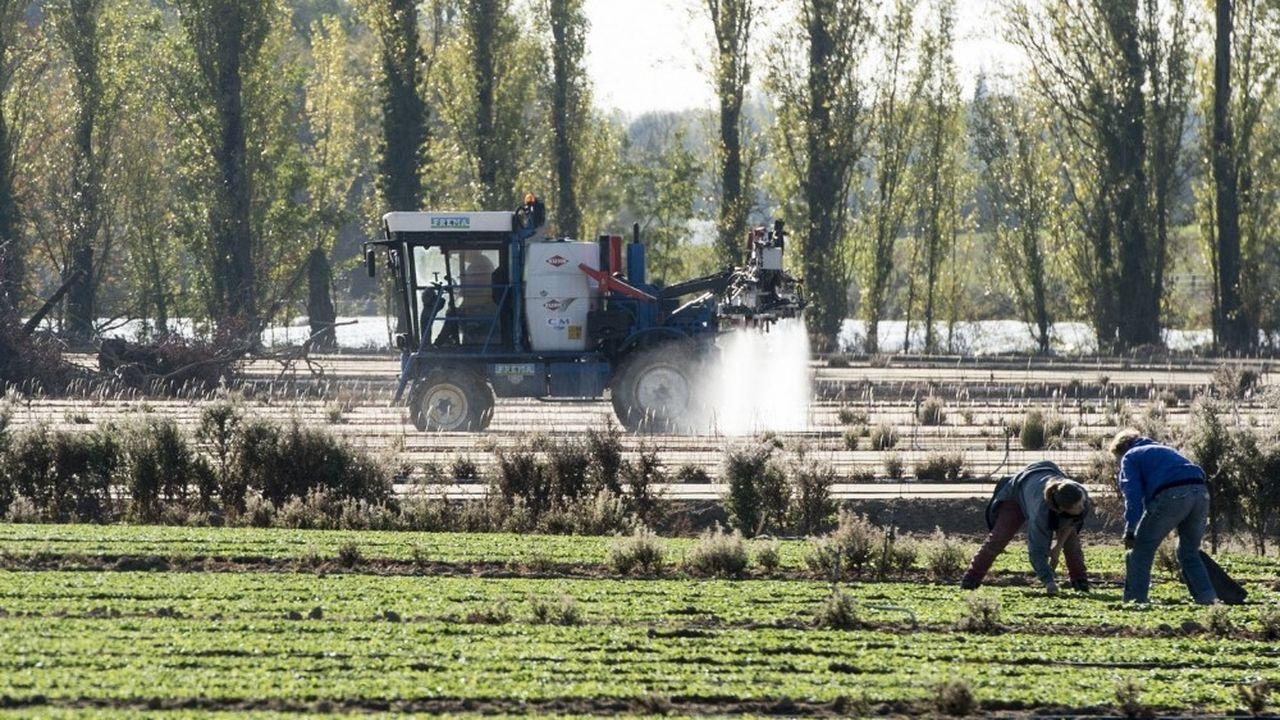 La semaine dernière, à la suite de l'intoxication de 76 personnes en Anjou, l'Etat a suspendu pour trois mois l'utilisation des produits à base de métam-sodium.