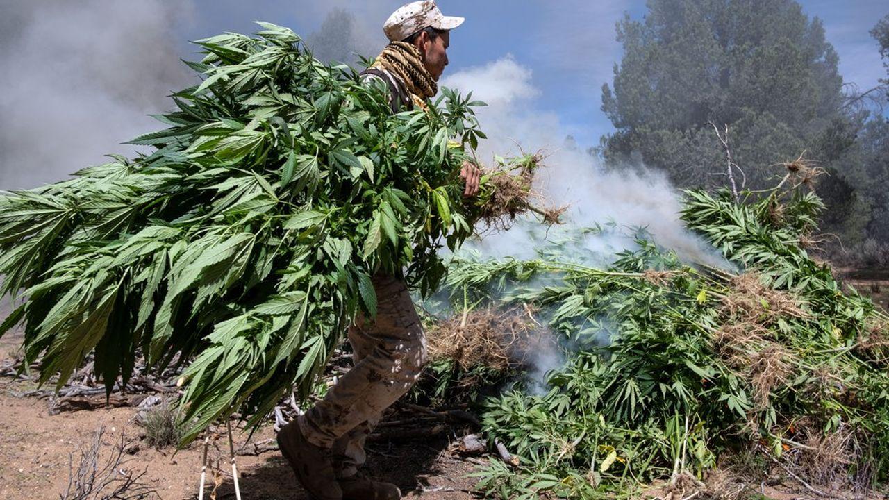 Si la loi est adoptée, le Mexique sera le troisième pays au monde à légaliser l'usage récréatif de la marijuana