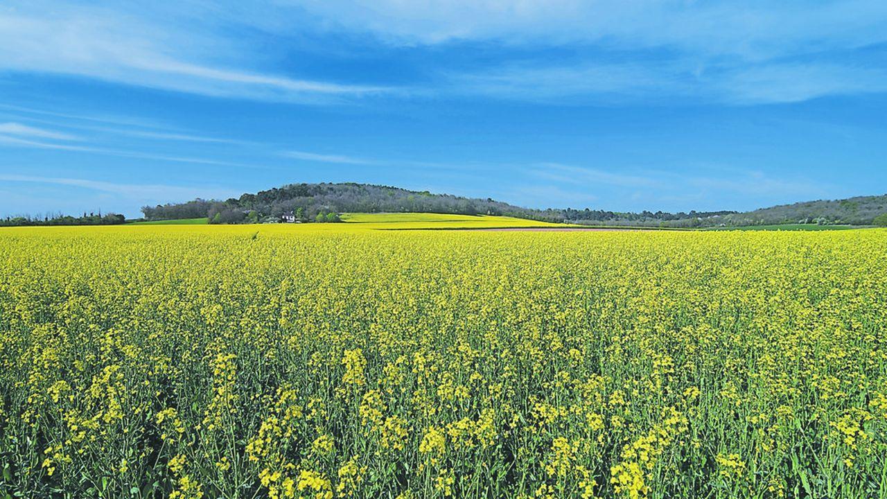 La production de Oleo 100 représente l'espoir d'un nouveau débouché pour les producteurs d'oléagineux français.