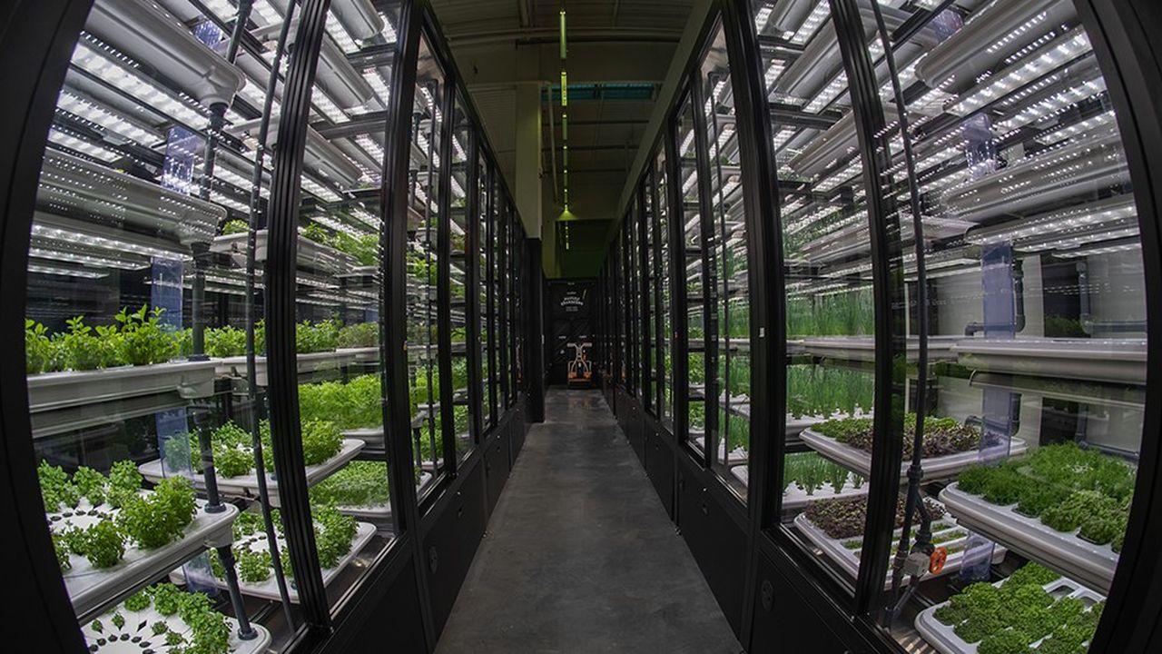 Les plantes sont cultivées en hydroponie. Une technique agricole, remplaçant la terre par de la fibre de coco immergée dans une eau saturée de nutriments et de sels minéraux, et le soleil par un éclairage LED.