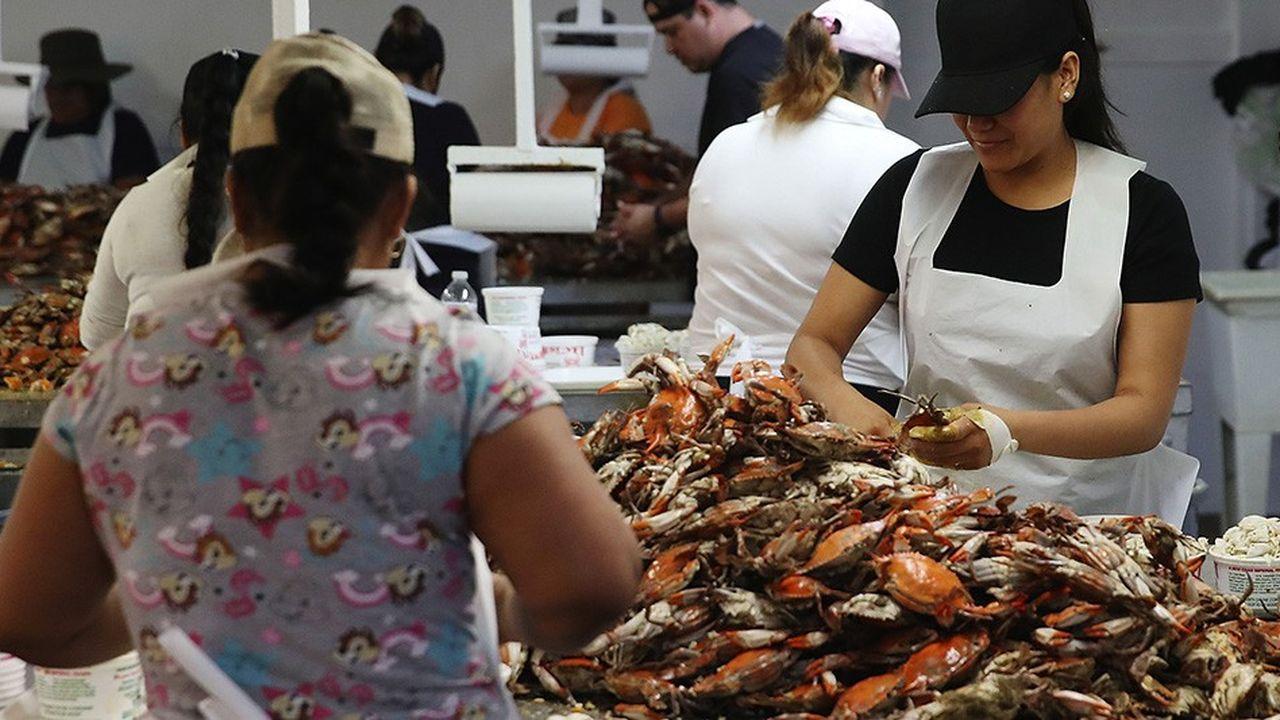 L'industrie du crabe a vu sa main-d'oeuvre disponible réduite de 40% cette année, à cause des restrictions sur les visas.