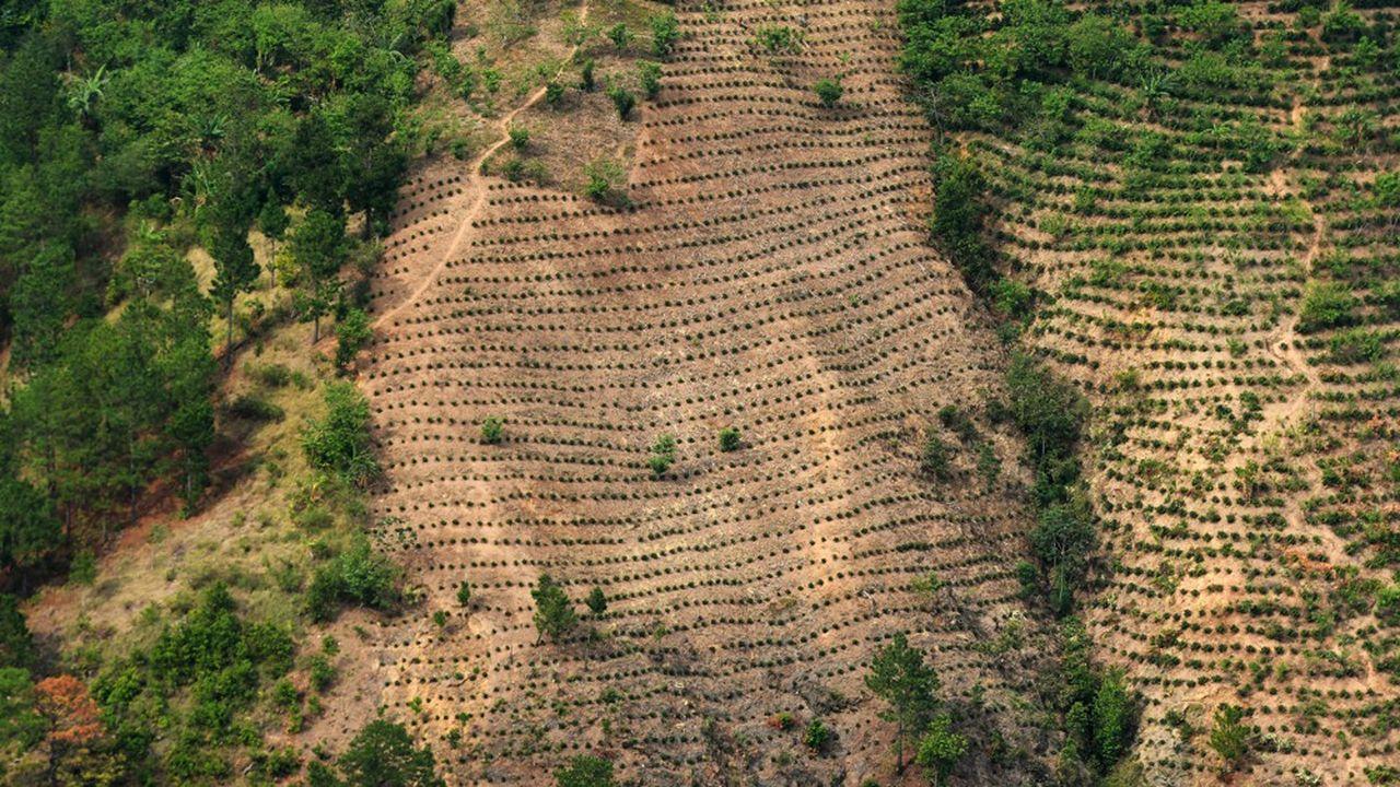 Selon l'Observatoire du climat, réseau à but non lucratif dédié aux changements climatiques, 46% des émissions de gaz à effet de serre du Brésil en 2017 étaient dues à la déforestation.