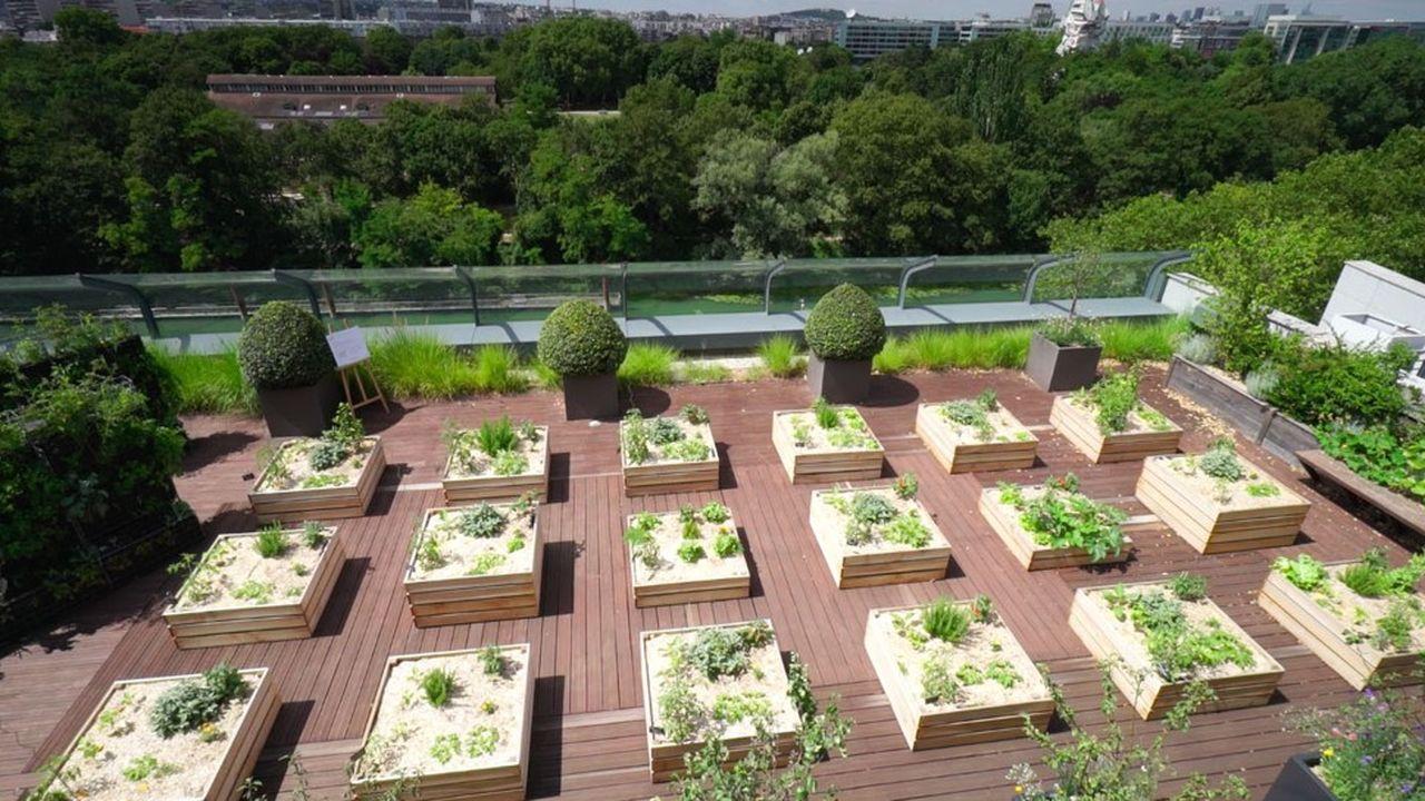 Ex terrasse VIP, le toit du siège de BNPRE à Issy-Les-Moulineaux est devenu un jardin experimental partagé