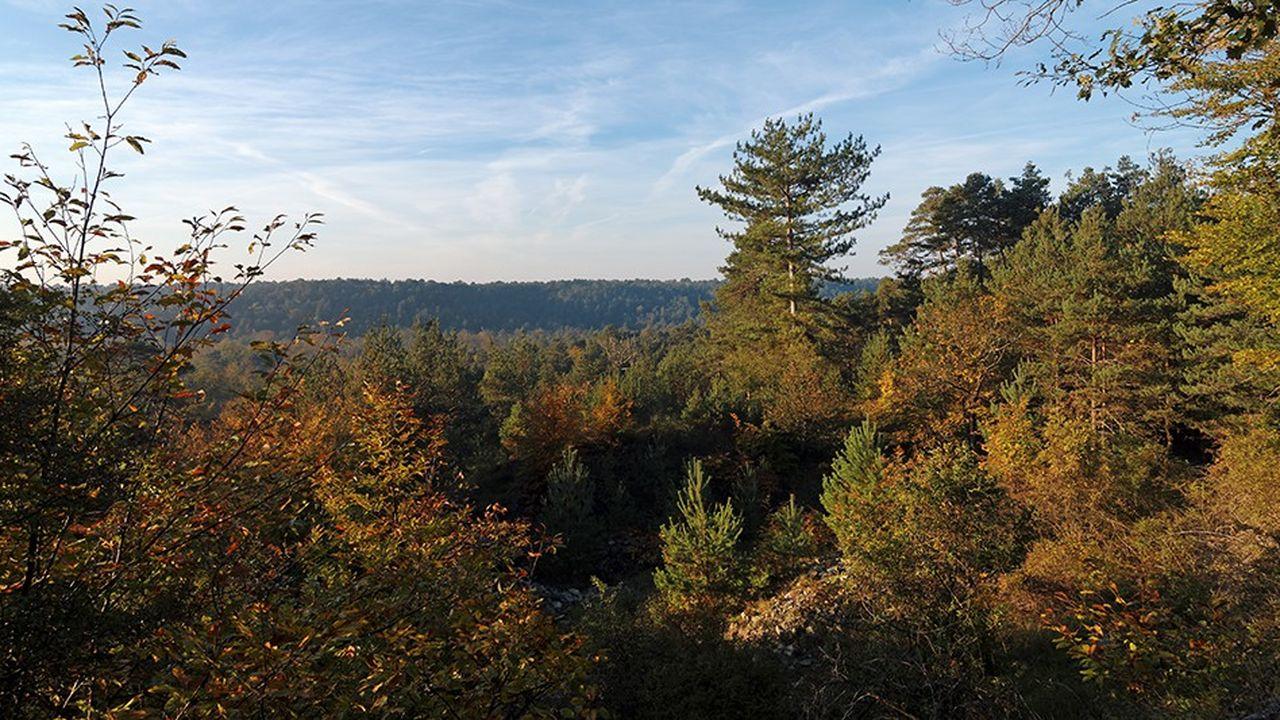 Une centaine d'arbres fruitiers (pommiers, poiriers, cerisiers et pruniers) ont été plantés mi-décembre pour restaurer le patrimoine naturel et préserver la biodiversité du parc du Gâtinais
