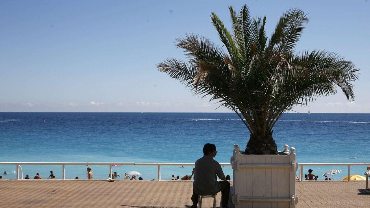 Un habitant de Nice a porté plainte contre la municipalité pour sa gestion de la prolifération de l'insecte