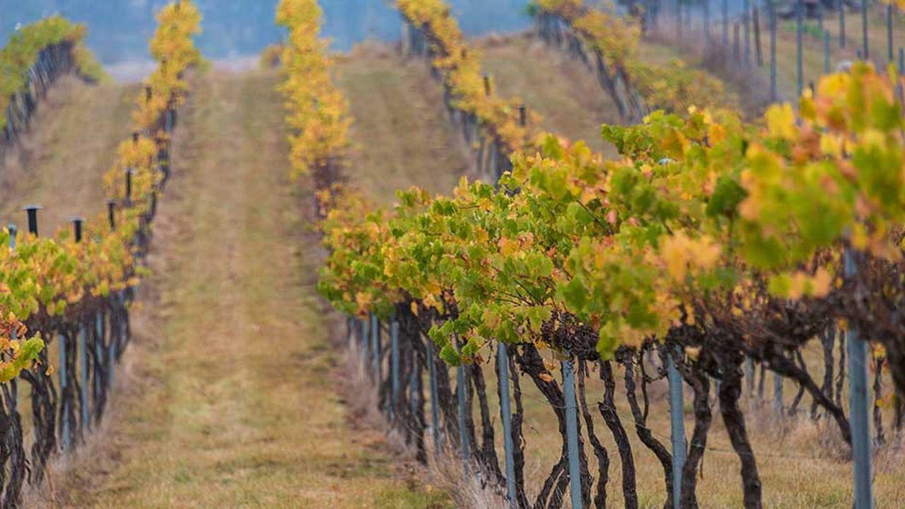 Le groupe Treasury Wine a réalisé un chiffre d'affaires de 2,4milliards de dollars australien (1,5milliard d'euros), lors de son exercice fiscal 2018.