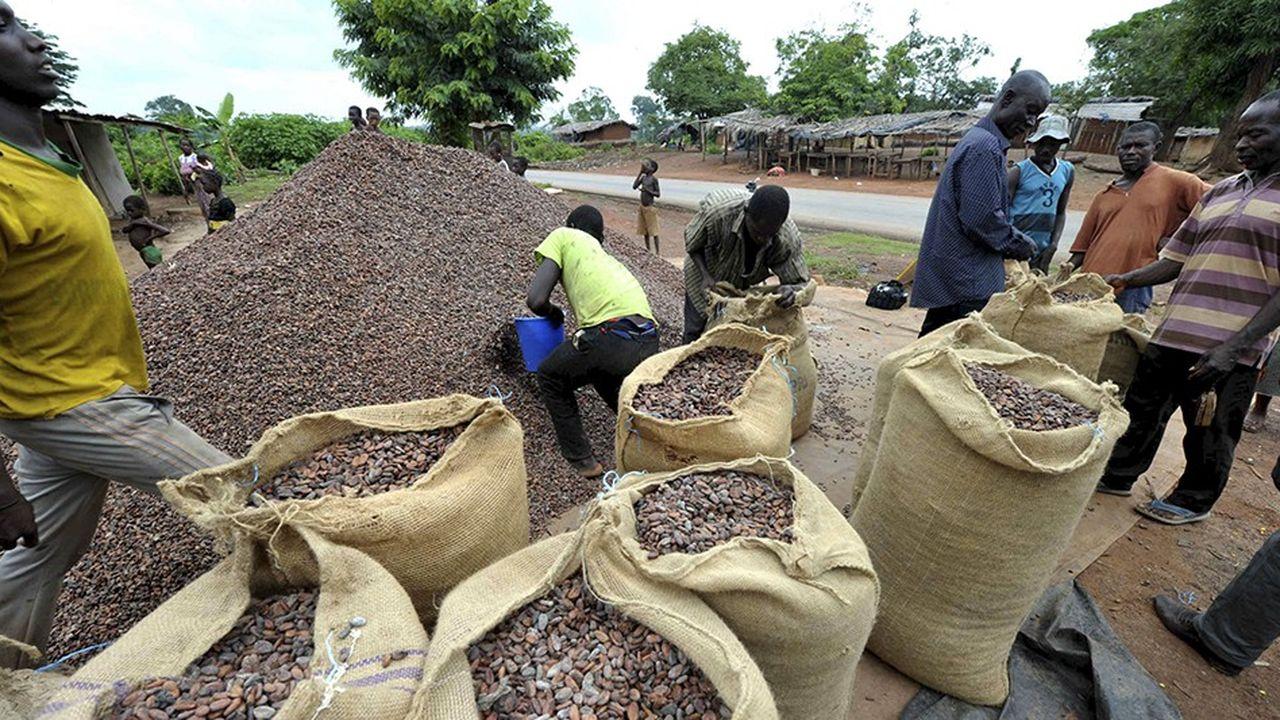 Séchage des fèves de cacao en Côte d'Ivoire.