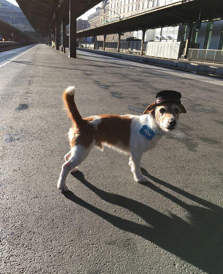 La mascotte de la marque, le chien Bobby, va, en vidéo, à la rencontre des différents métiers de la SNCF.