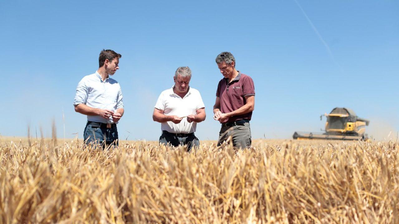 Axéréal opère un virage stratégique à 180 degrés au profit d'une production de céréales transformées à forte valeur ajoutée, comme les blés de grande qualité et le malt pour la bière et le whisky