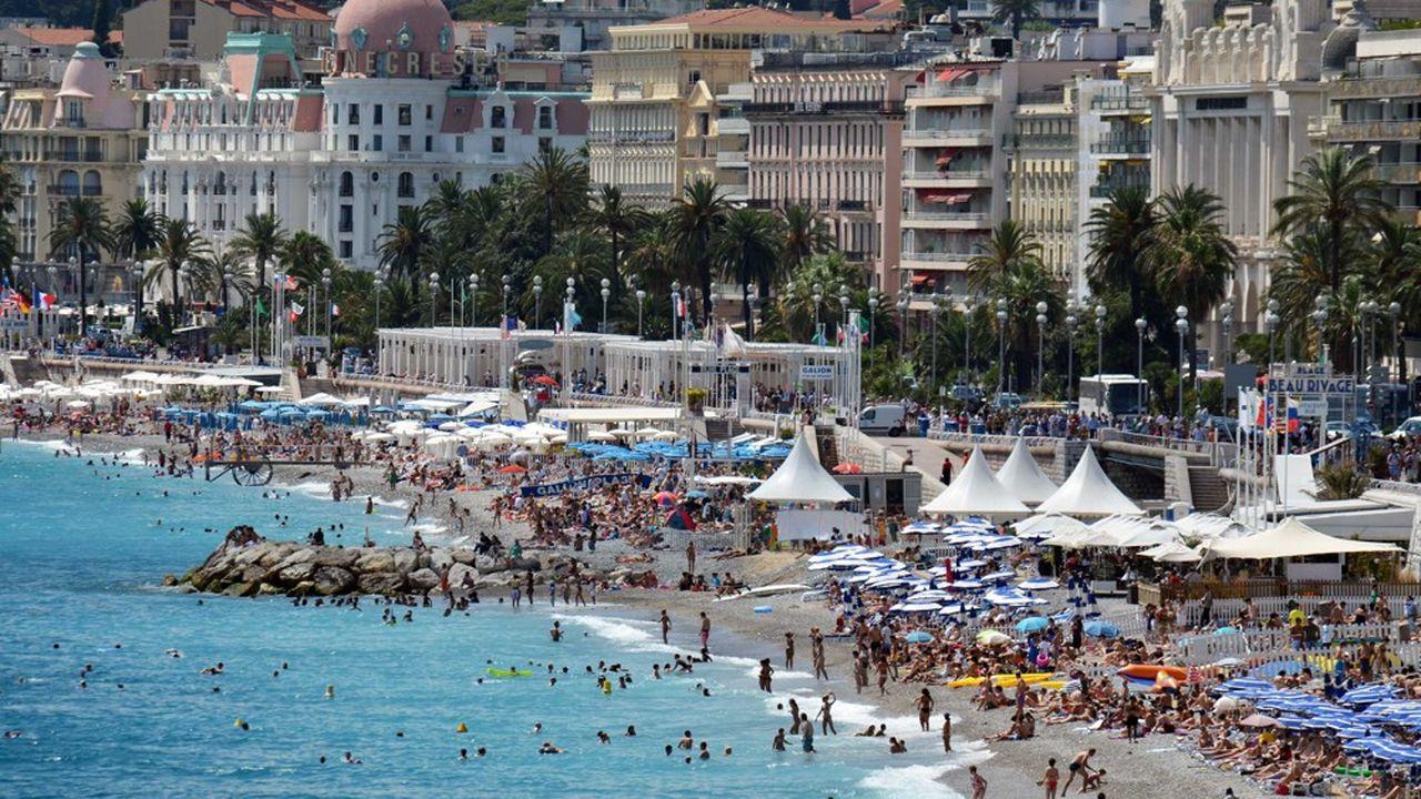 Le charançon rouge décime les palmiers du littoral français , et notamment ceux de Nice, depuis dix ans.