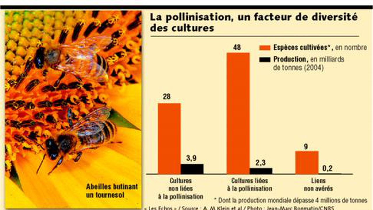 agriculteurs solitaires datant