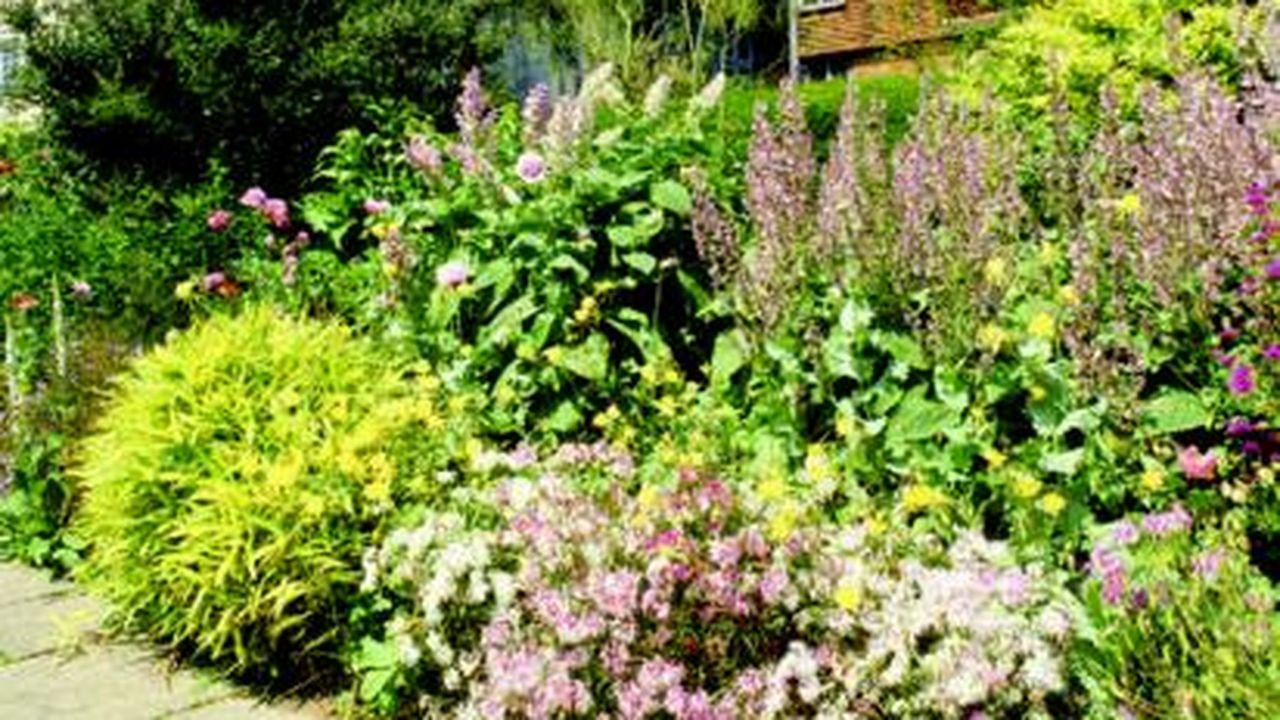 Les Stars Du Jardin à L Anglaise Les Echos
