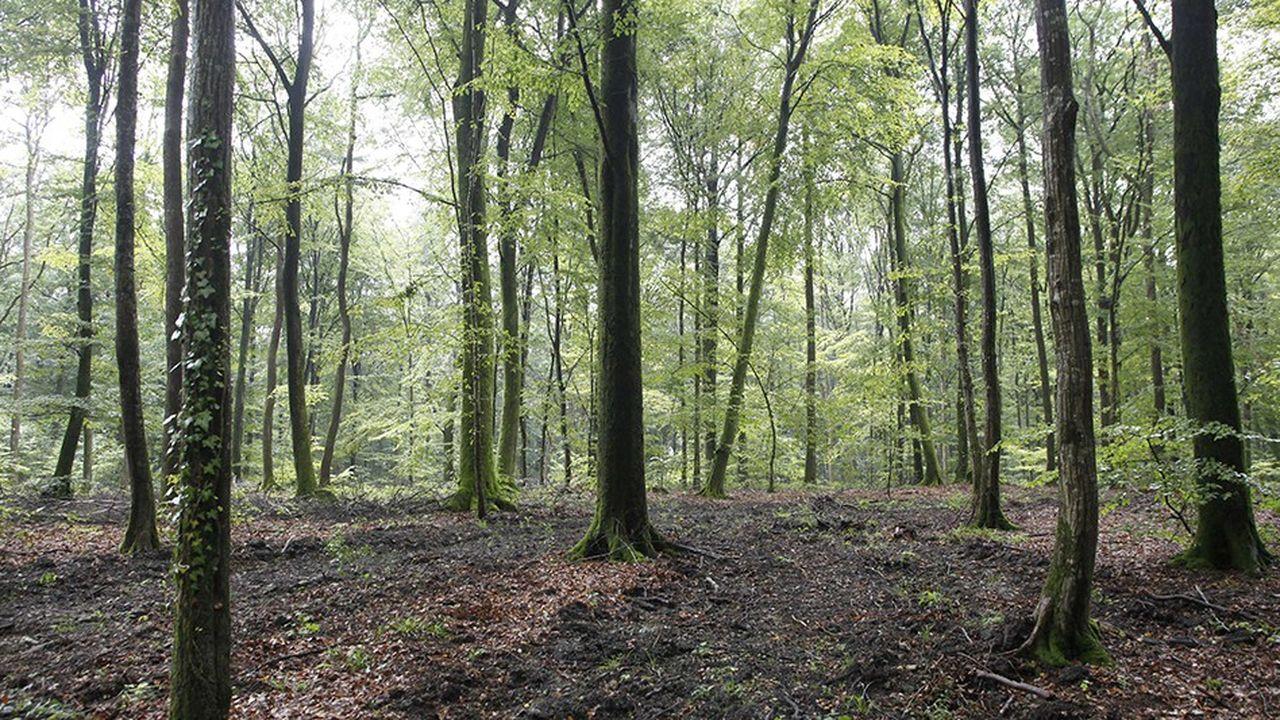 Les syndicats de l'ONF dénonçaient lors de la manifestation d'octobre dernier en forêt de Tronçais «l'industrialisation croissante des forêts publiques».