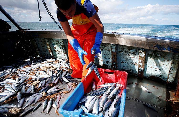 Avec un «hard Brexit», le Royaume-Uni quitterait dès fin mars la politique communautaire de la pêche