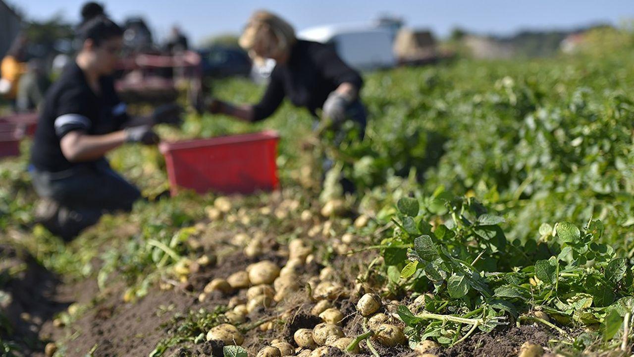 Récolte sur l'île de Noirmoutier.