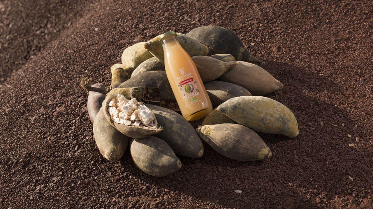 baobab (2).jpg