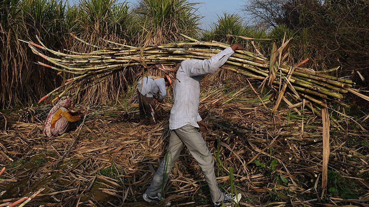 En Inde, la moitié de la population est paysanne.