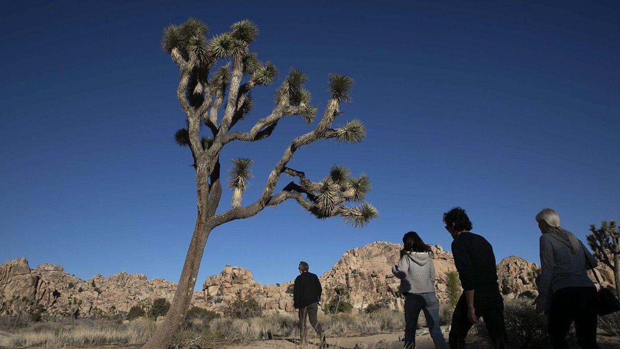 Les visiteurs ont continué à parcourir le parc nationalJoshua Tree malgré le «shutdown».