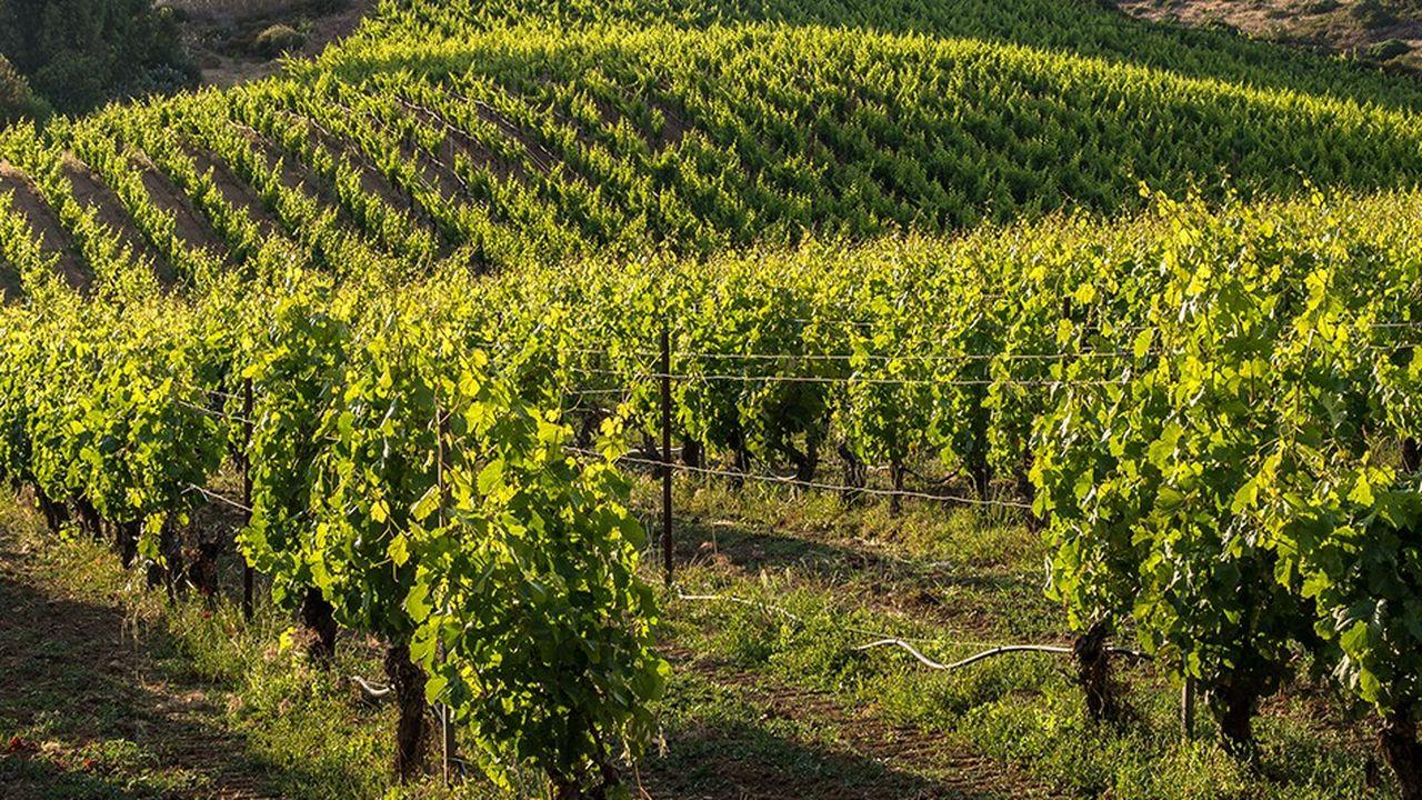 Plus de 220 pieds de vigne ont été mis en terre sur un terrain inoccupé de la municipalité de Courdimanche.