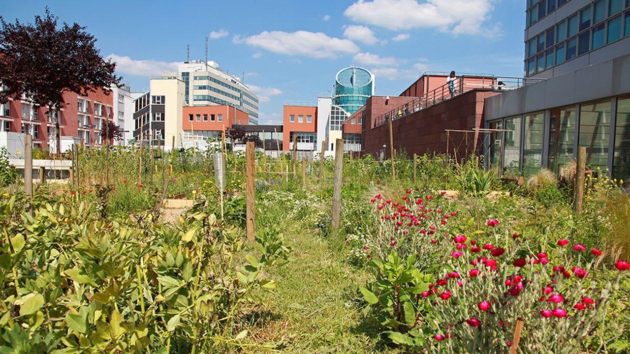 Montreuil ouvre ses friches aux jardiniers amateurs | Les Echos