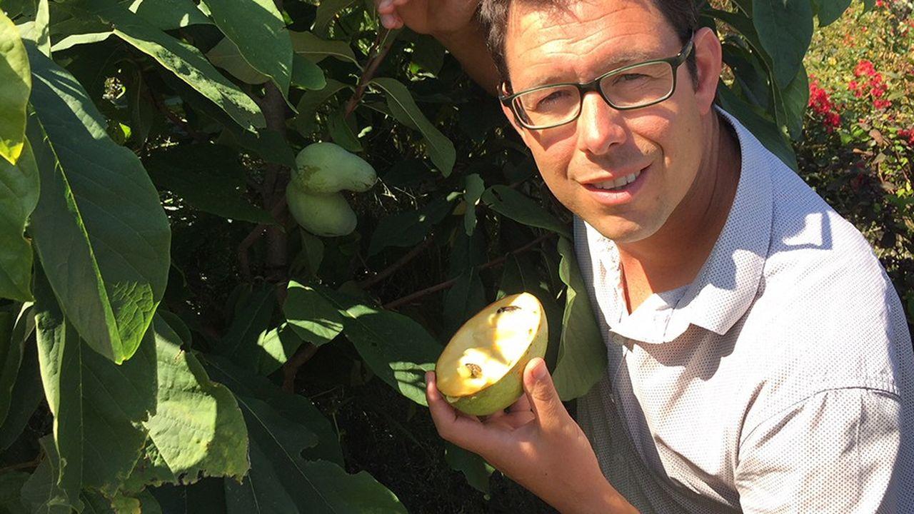 Marc Henri Doyon present la mangue du Nord -asimine